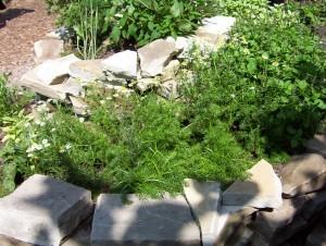 CCG-organic gardening