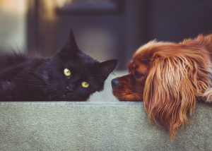 A picture of a cat and a dog.