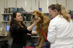Villarnovo and Dr. McCleery-Wheeler examine a canine lymphoma patient.
