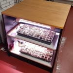 A bookcase converted into a light frame for seedlings -grow lights above seed trays placed on the shelves