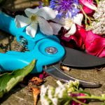 Turquoise handled pruning shears surrounded by flower petals