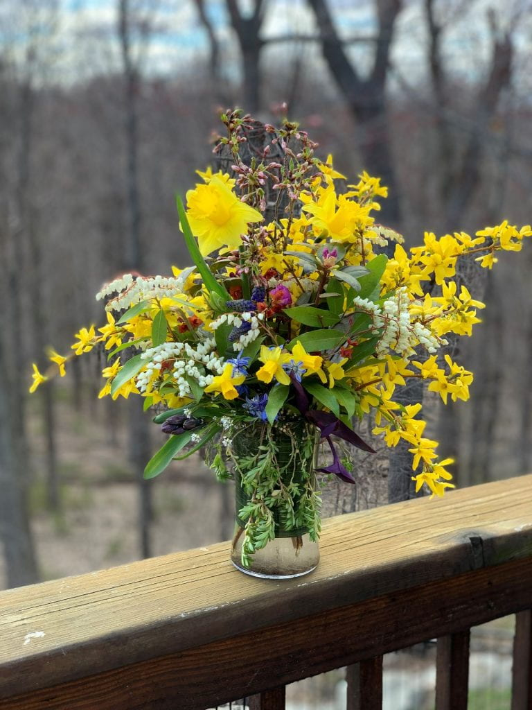 Spring bouquet of bright yellow daffodils and forsythia, purple grape hyacunth, white andromeda, and buds of a pink cherry tree