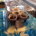 Mini greenhouse made from areused plastic container covering a small tray with 8 small cups of soilEight small cups of soil