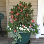 Large green pot with a plant with pink flowere, a short plant with white flowers and a varigated plant spilling over the side