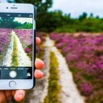 Taking a picture of a field of flowers with a smart phone