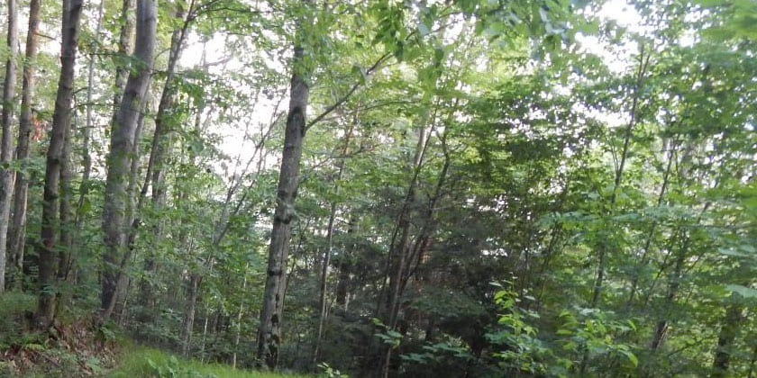 wooded area in Lennox Forest, Delhi, NY