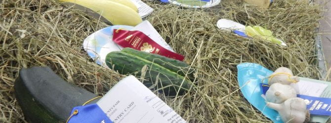 horticulture exhibits on a bed of hay at the county fair with a mix of blue and red ribbons