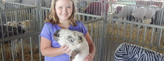 youth smiling and posing with their sheep inside a pen at the Delaware County fair. Sheep in pen are wearing zebra striped and pink camo coats to stay clean.