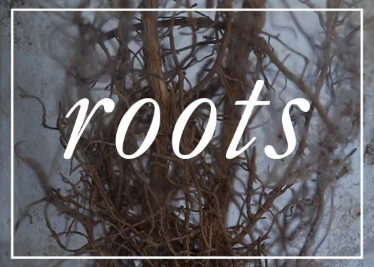 roots-imagery