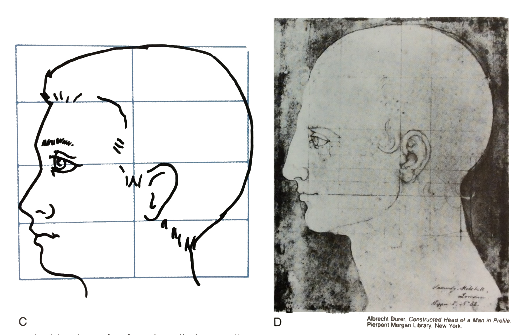 A Side View Of A Face Is Called A Profile Sometimes Artists Draw Guidelines  Before They
