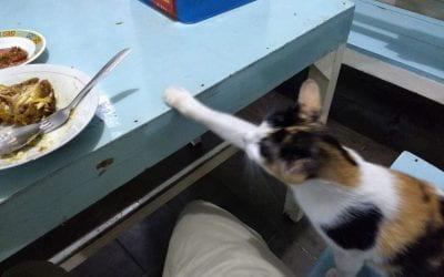Applying language skills. Also, cats