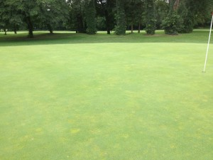 Annual bluegrass in a bentgrass putting green