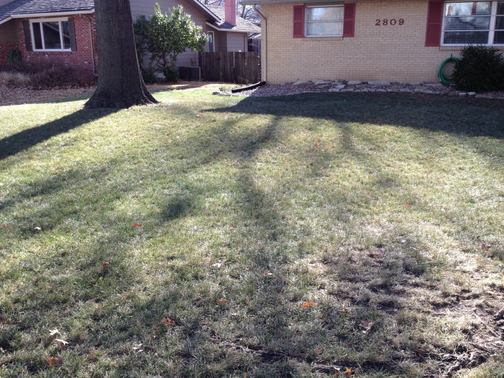 My Neglected Tall Fescue Lawn - Nov. 28, 2014