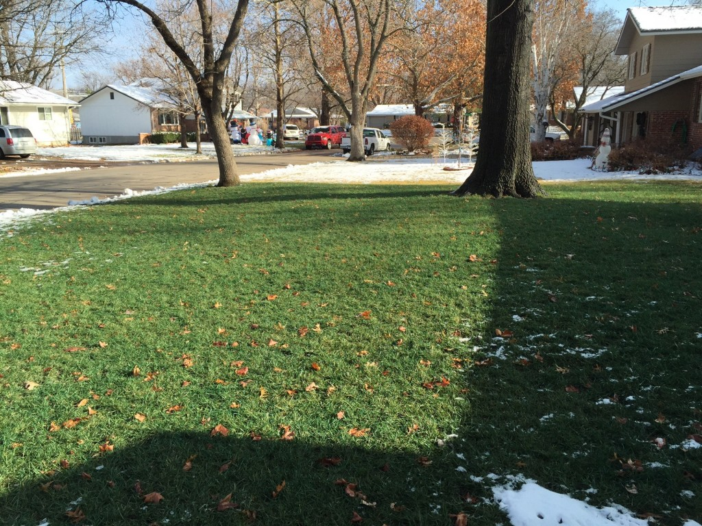 Dec. 20, 2014 - Front lawn still showing attractive winter color.