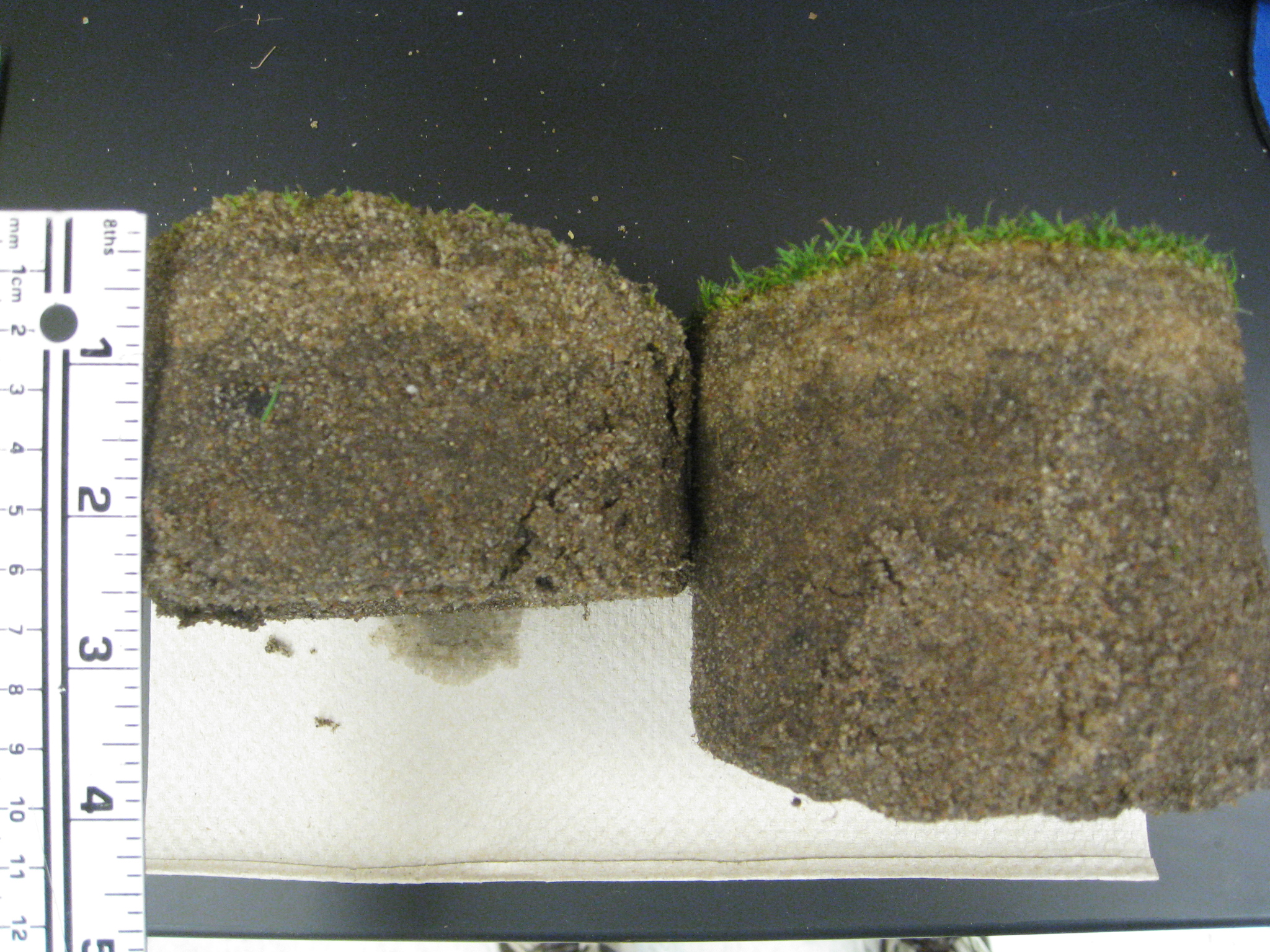 Summer weather can be ruthless when the turf is stressed ...
