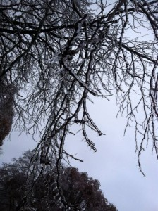 ice-honeylocust-thanksgiving-2015