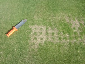 aerification-holes-growth-may-2015