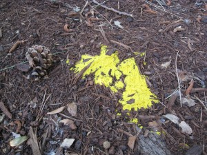 slime_mold_yellow_mulch