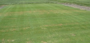 r ford pythium blight