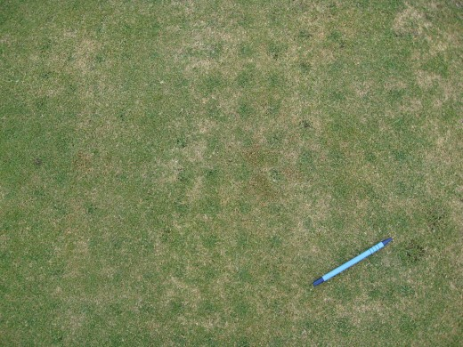 green_in_aerification_holes