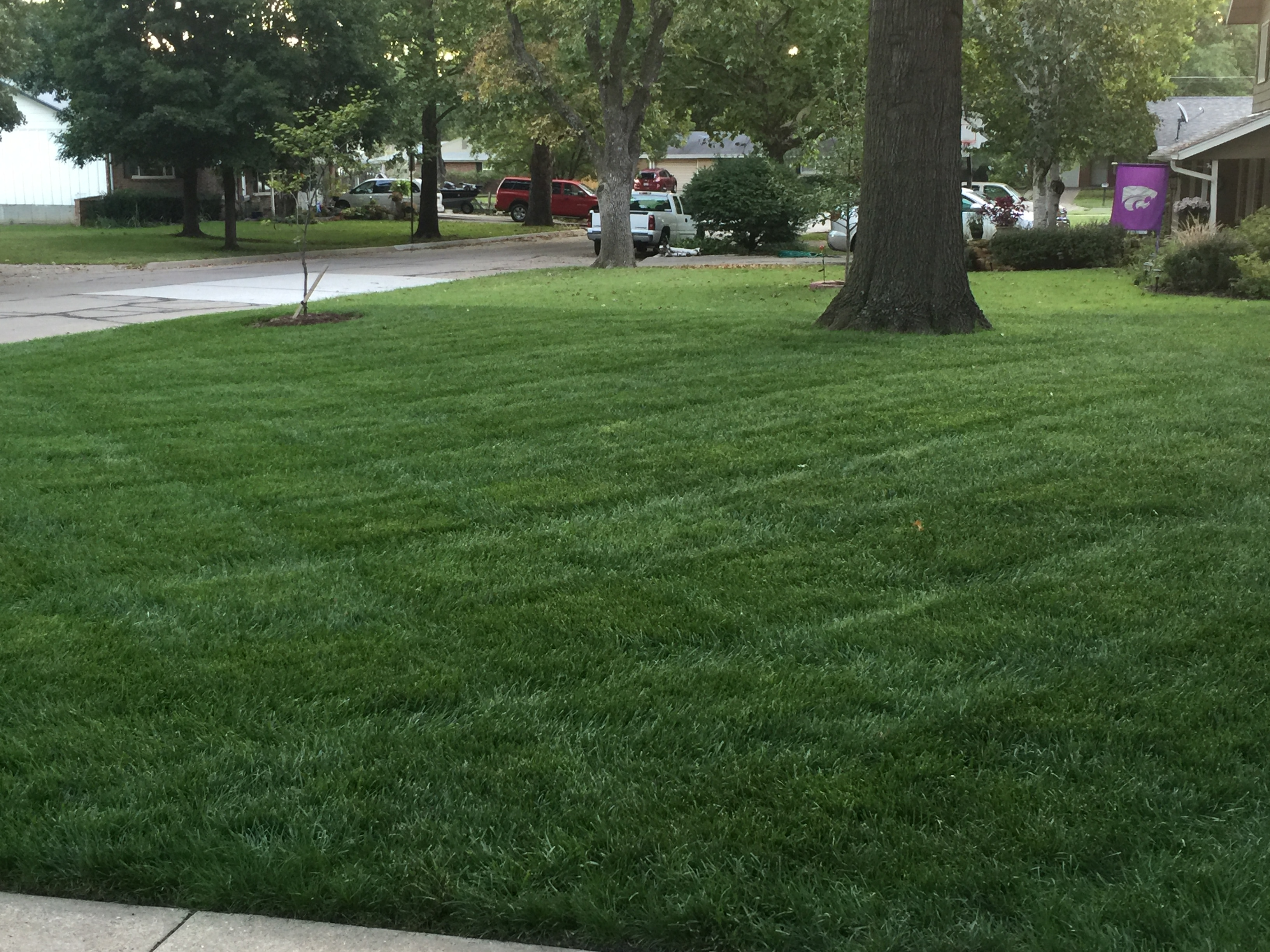 Tall fescue k state turfgrass homeowner do it yourself lawn calendar for cool season grasses solutioingenieria Gallery