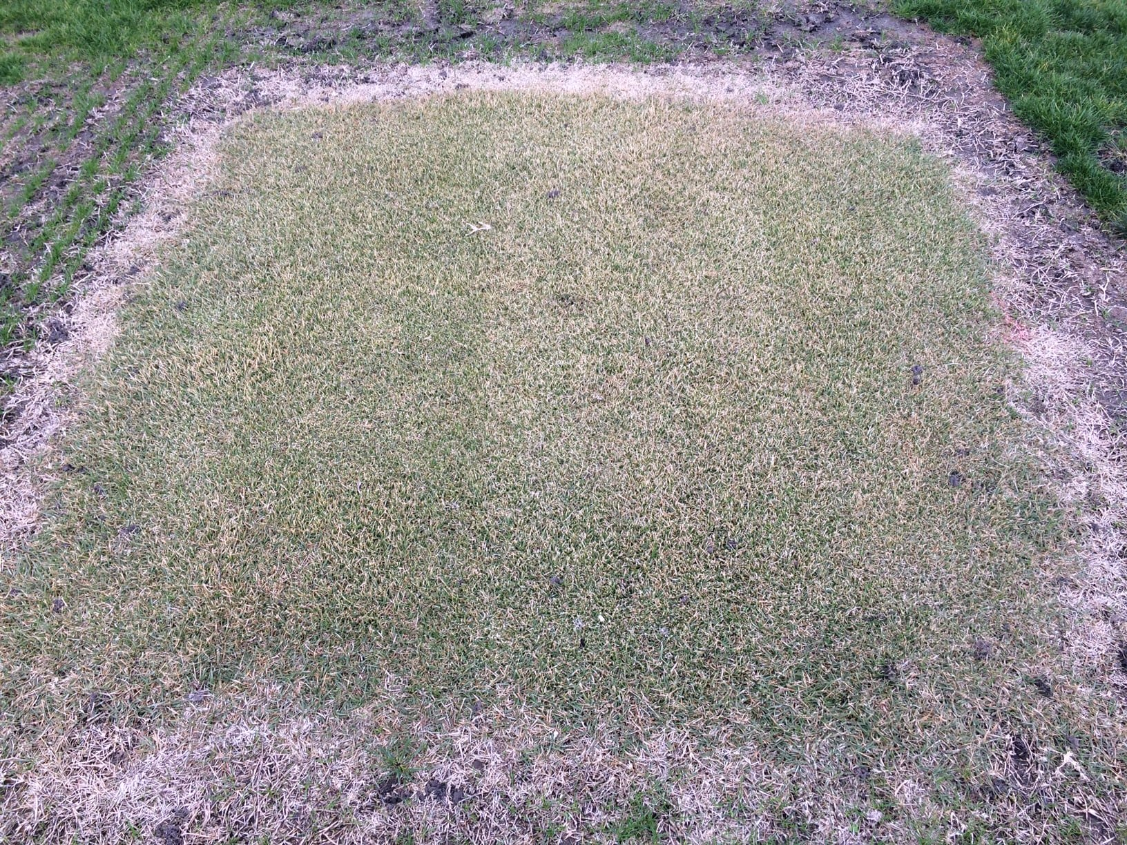 Education Events Research | K-State Turfgrass