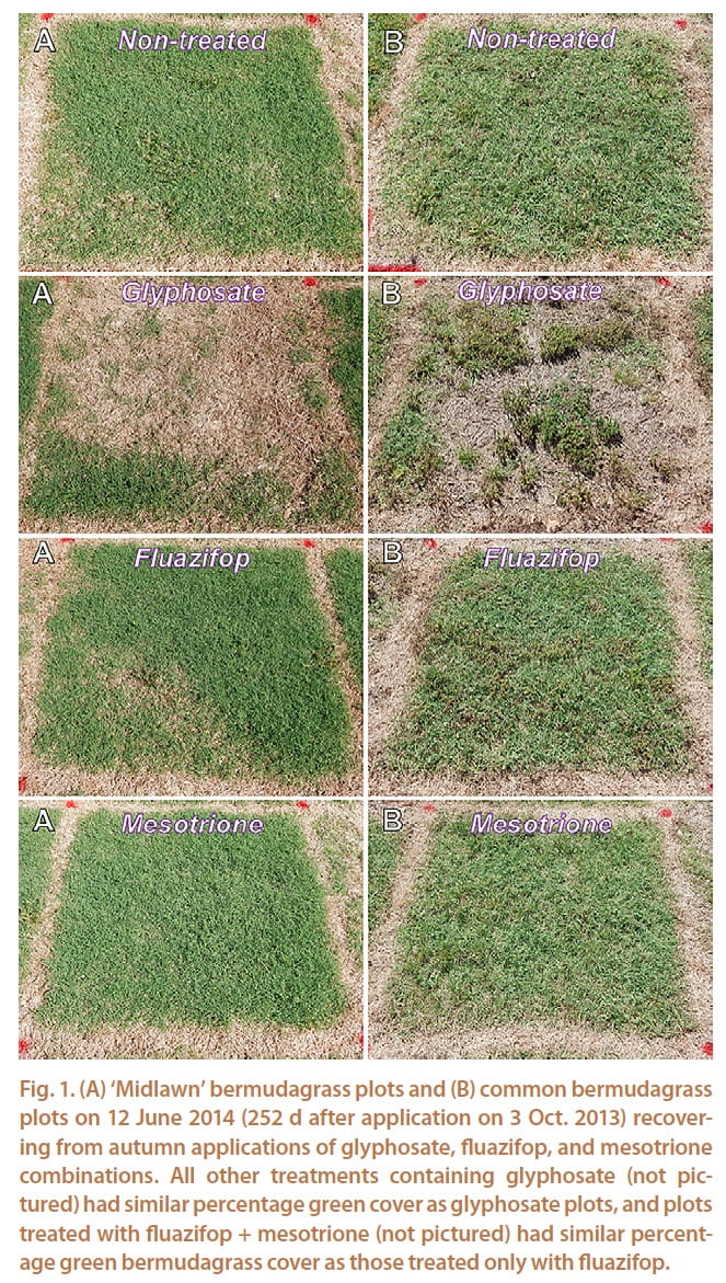 Bermudagrass Control K State Turf And Landscape Blog