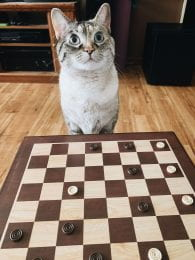 Anna's cat, snow, playing checkers