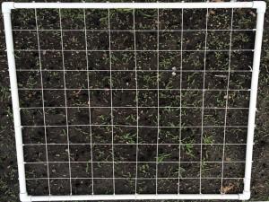 7-grid - jpg