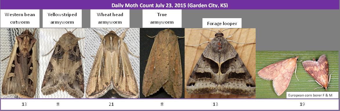 072315 moths