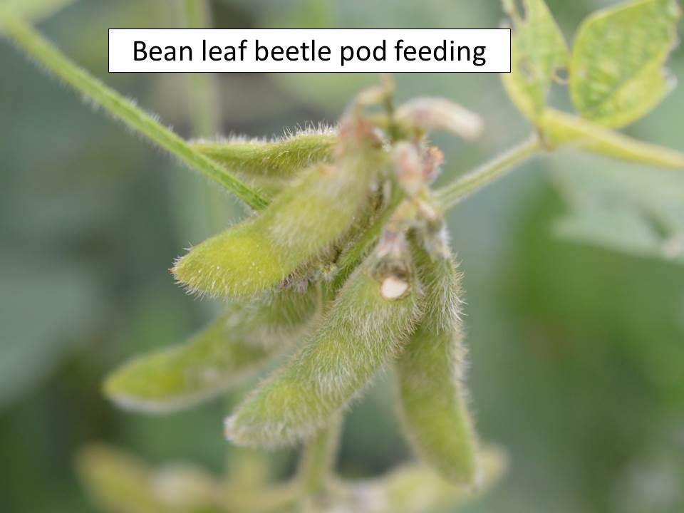 blb-feeding-pod