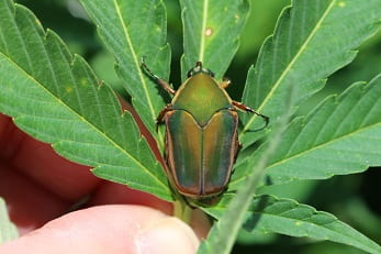 Extension Entomology