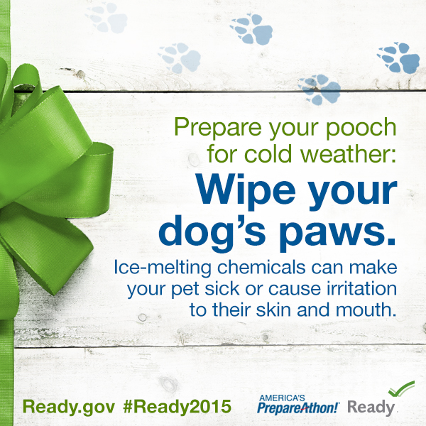 Prepare Your Pooch