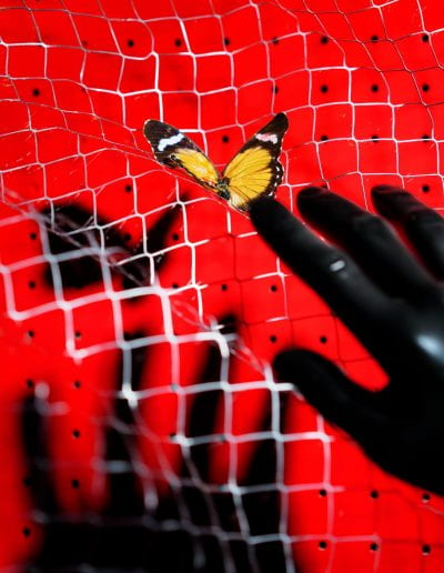 """Almost Caught A Butterfly, 2019, Archival Inkjet Print, 20""""x25"""""""