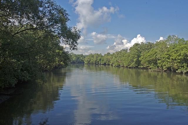 (Nature) Sungei Buloh Wetland Reserve