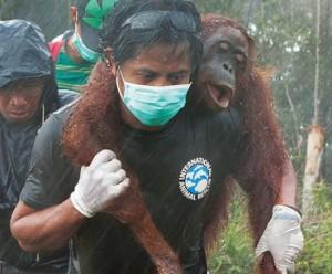 Source: Rainforest Rescue
