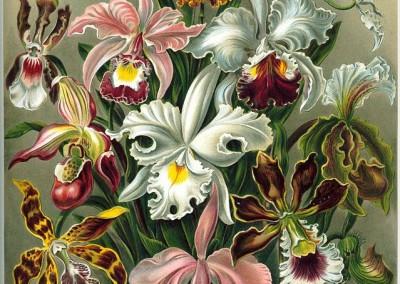 Ernst Haeckel's Kunstformen der Natur (1904)