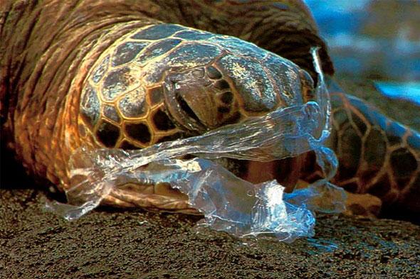 Impacts on Marine Animals | PLASTICS IN OCEANS