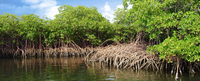 Land Ecosystems Conservation The Resilience Of Nature