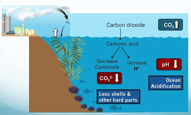 Ocean acidification shanice for Ocean bed meaning