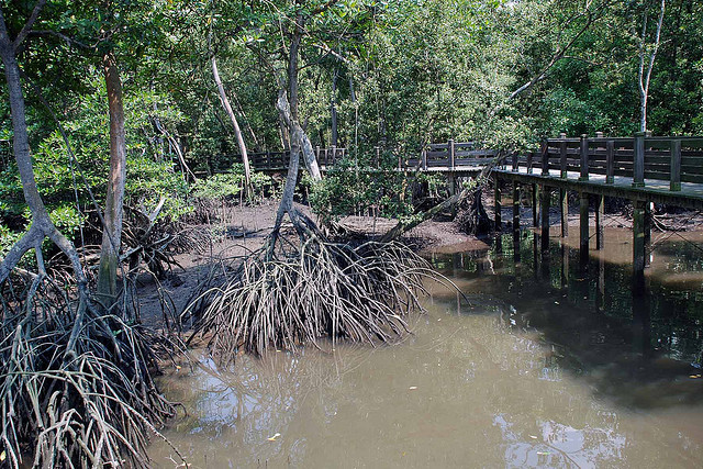 sungei buloh wetland reserve nature reserves and the