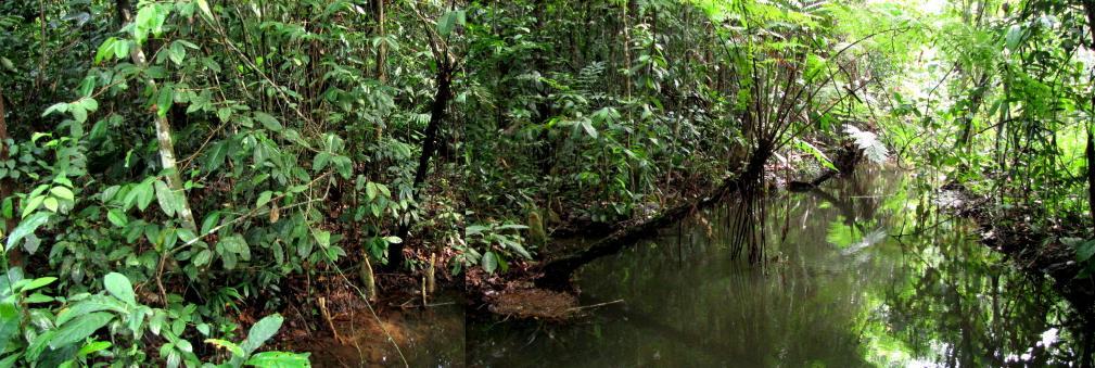 (source: florasingapura.com)