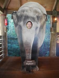 Photo taken at the Singapore Zoo