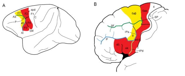 7  Cognitive Adaptations