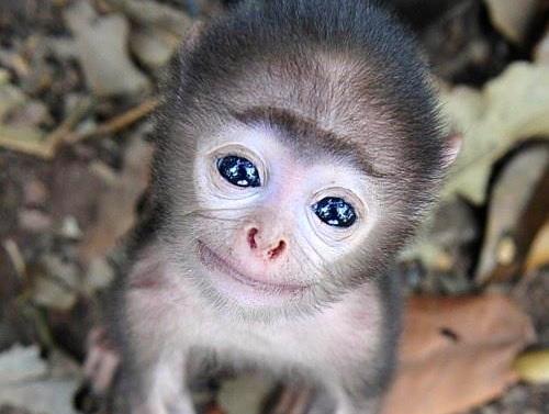 Endangered Primates of Vietnam