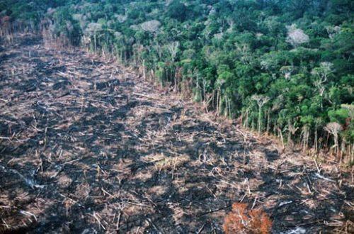 Main Threats | Endangered Primates of Vietnam