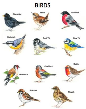 Bird Examples