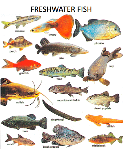 Context vietnam endangered primates of vietnam for Fish in vietnam