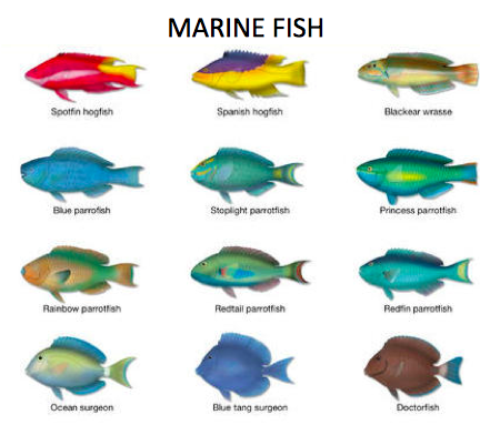 Example of marine fish examples of marine animals 2017 for Examples of fish