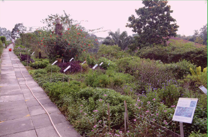 The Herb Garden Is Home To More Than 300 Species Of Herbs.